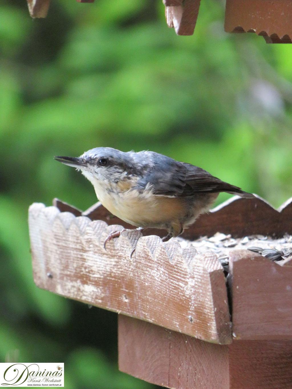 Im Naturgarten: Kleiber Jungvogel besucht auch im Sommer das Futterhäuschen.