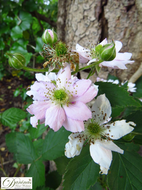 Im Naturgarten bieten Brombeeren und andere Beerenstauden den Vögeln Schutz und Nahrung