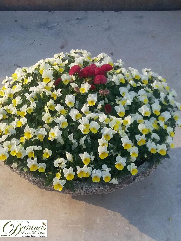 Grabbepflanzung Frühjahr pflegeleicht - Schale mit gelben Stiefmüterchen und roten Bellies