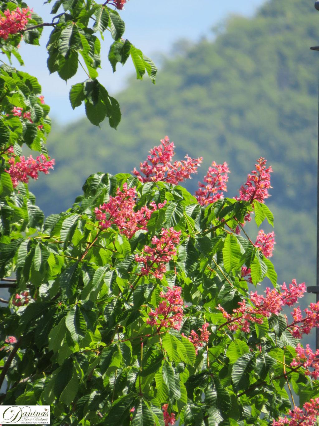 Kastanienbaum Blüte rot - Garten Impressionen im Frühsommer by Daninas-Kunst-Werkstatt.at