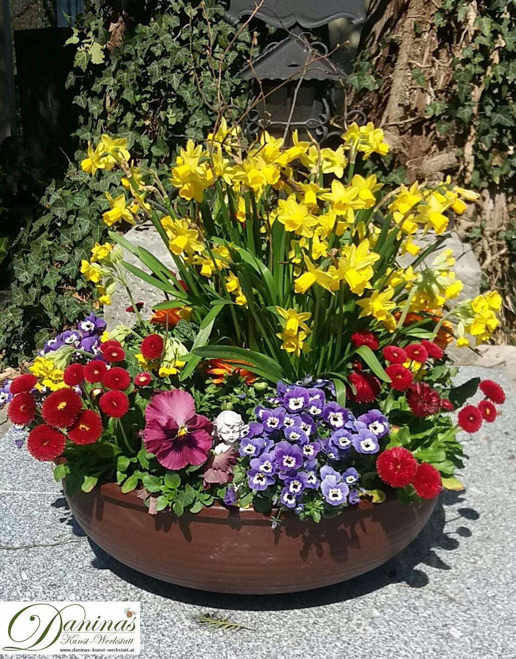 Grabbepflanzung Frühjahr pflegeleicht - Schale mit Märzenbecher, roten Bellis und Stiefmütterchen