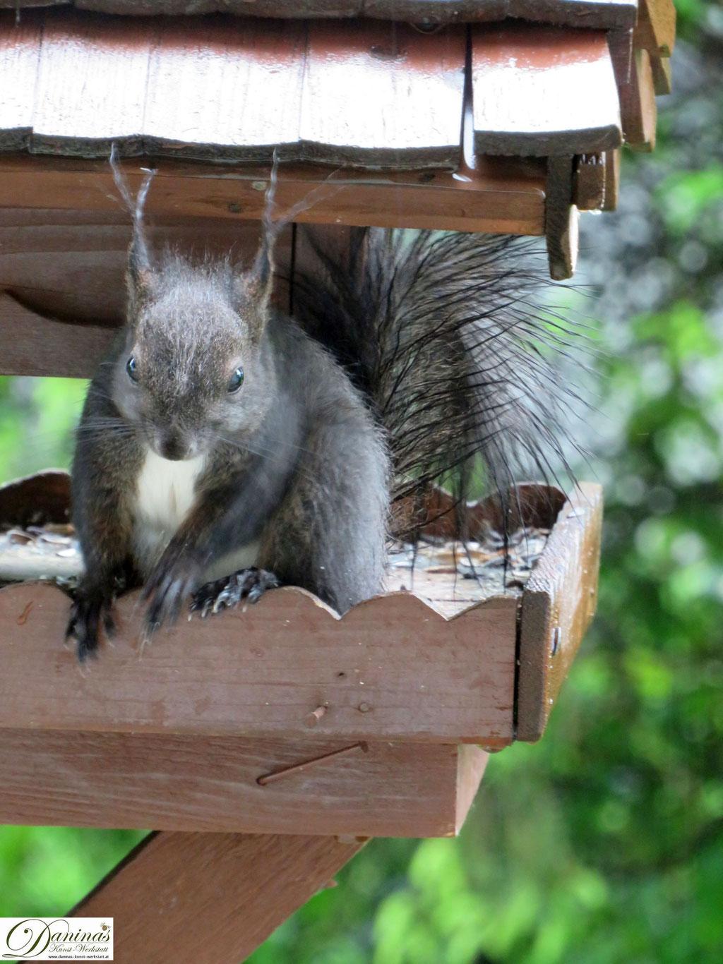 Eichhörnchen freut sich über gut sortiertes Vogelhaus
