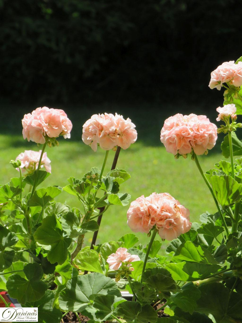 Belagonie - Garten Impressionen im Frühsommer by Daninas-Kunst-Werkstatt.at