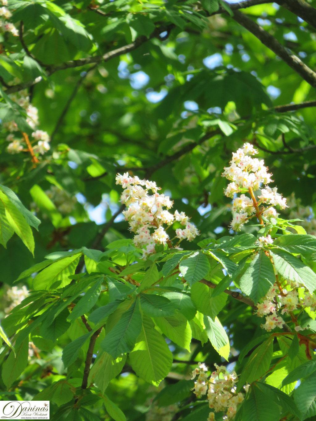 Kastanienbaum Blüte weiß - Garten Impressionen im Frühsommer by Daninas-Kunst-Werkstatt.at