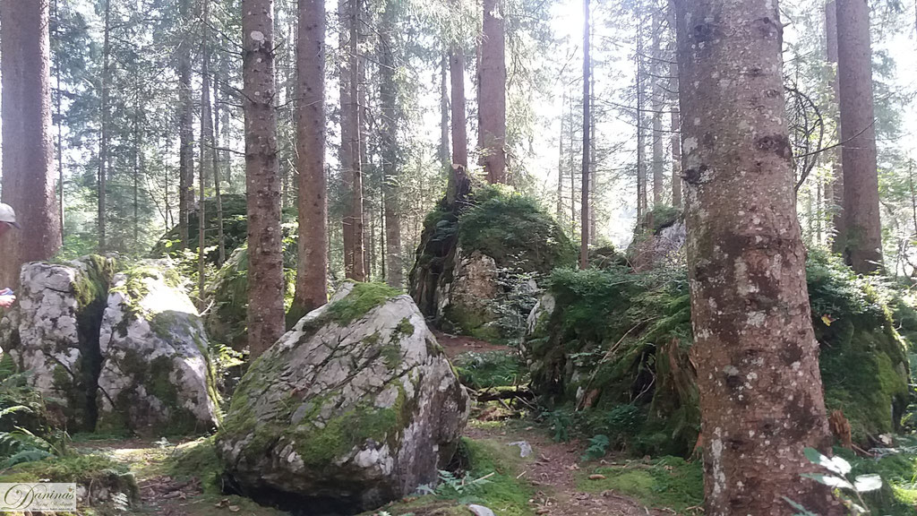 Felsen im Zauberwald