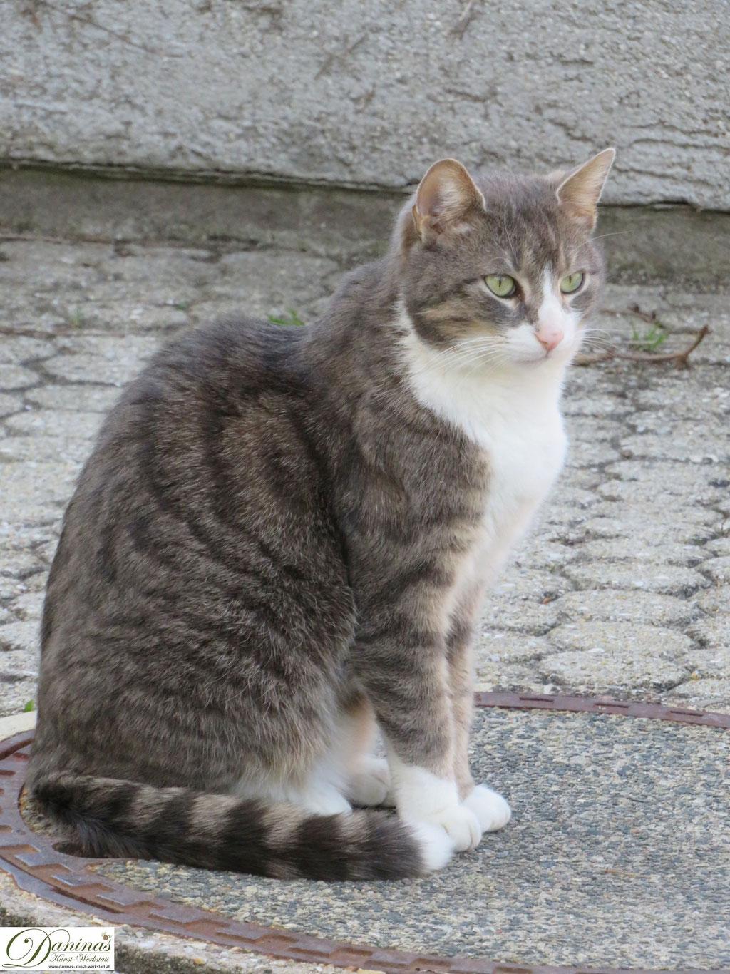 Katze Pauli im Frühling im Garten