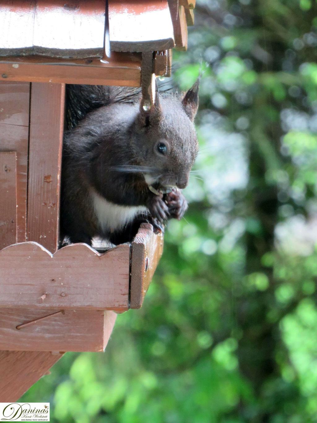 Eichhörnchen suchen gerne auch die Vogelfutterstellen im naturnahen Garten auf.