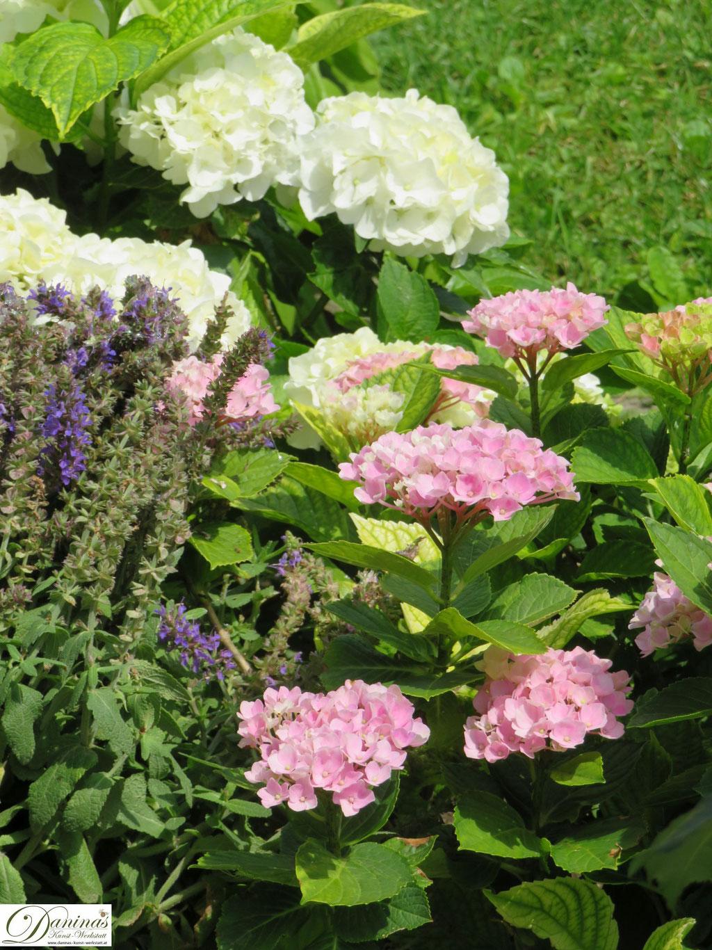 Romantischer Hortensien Garten