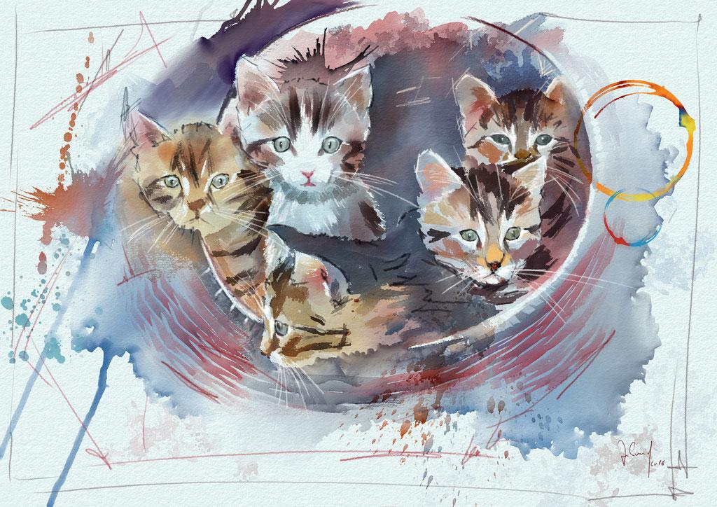 Ein Katzen-Universum