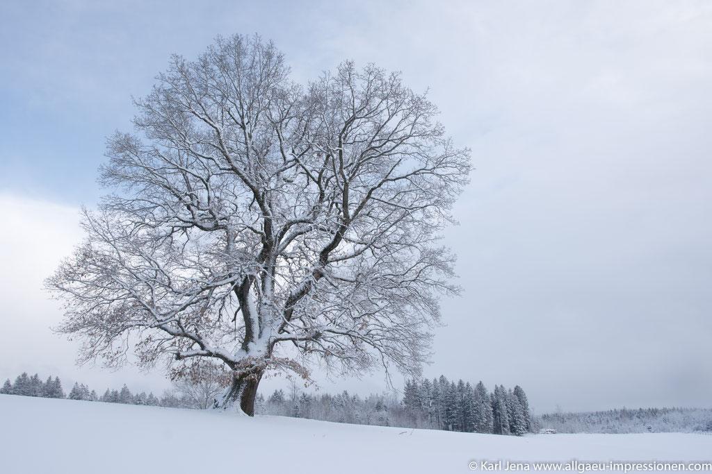 Schneesturm im Oberallgäu
