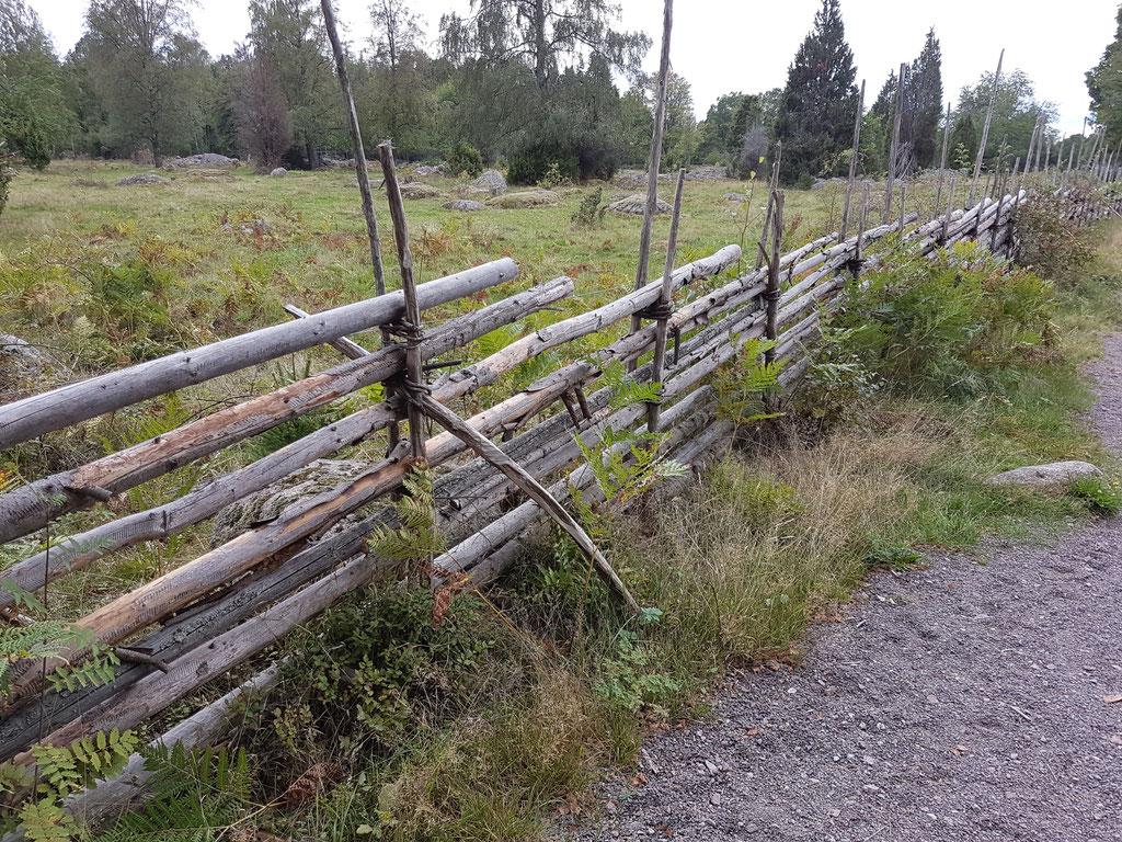 Kvill alte Eiche Schweden Skandinavien overland Travel Camping #ProjektBlackwolf wolf78  explore without no limits roadtrip offroad Overlandingnomads Dachzeltnomaden wolf78-overland.ch