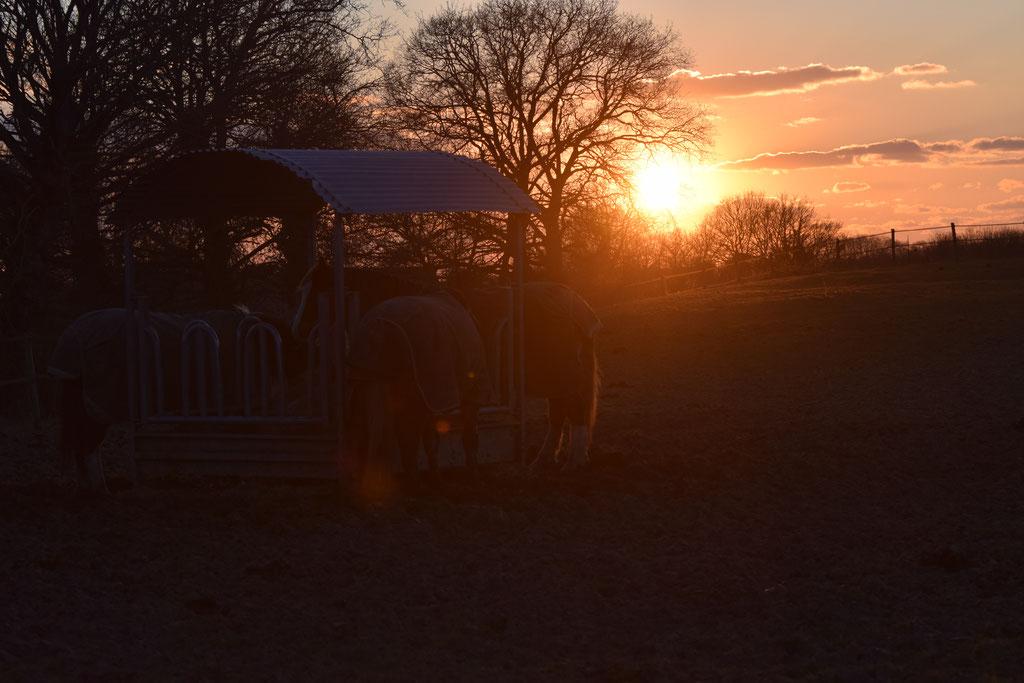 Les pâturages au coucher du soleil