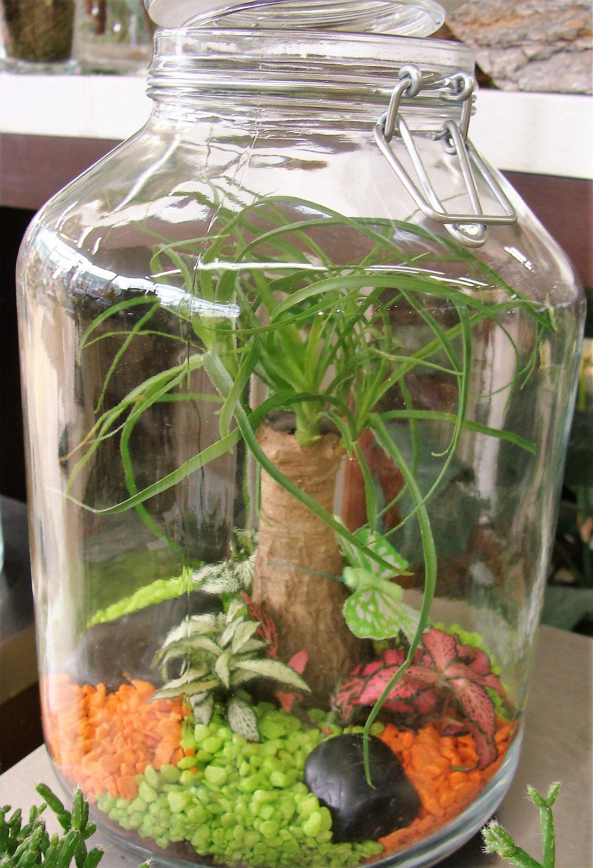 Terrarium de plantes en bocaux