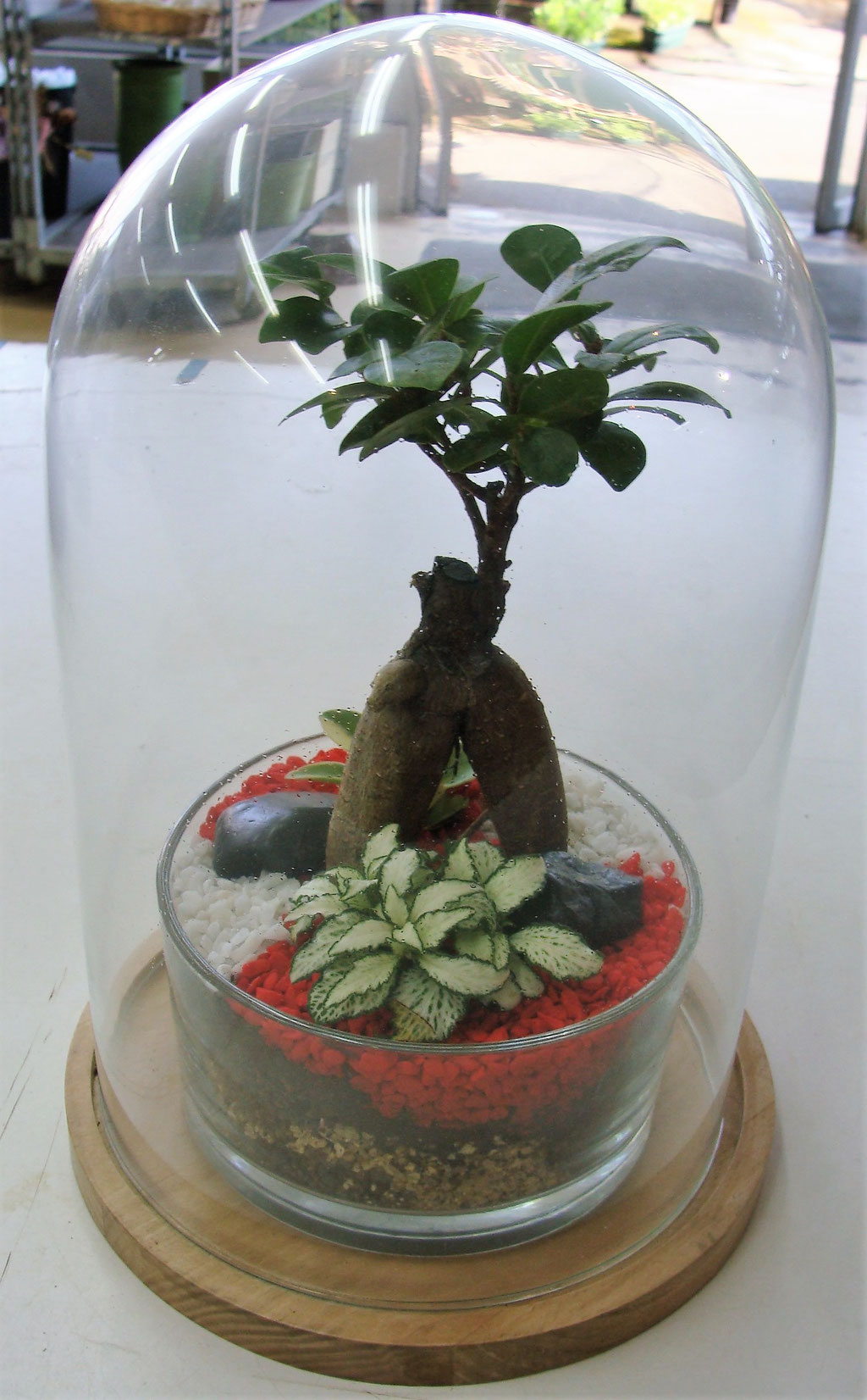 Terrarium de plantes sous cloche