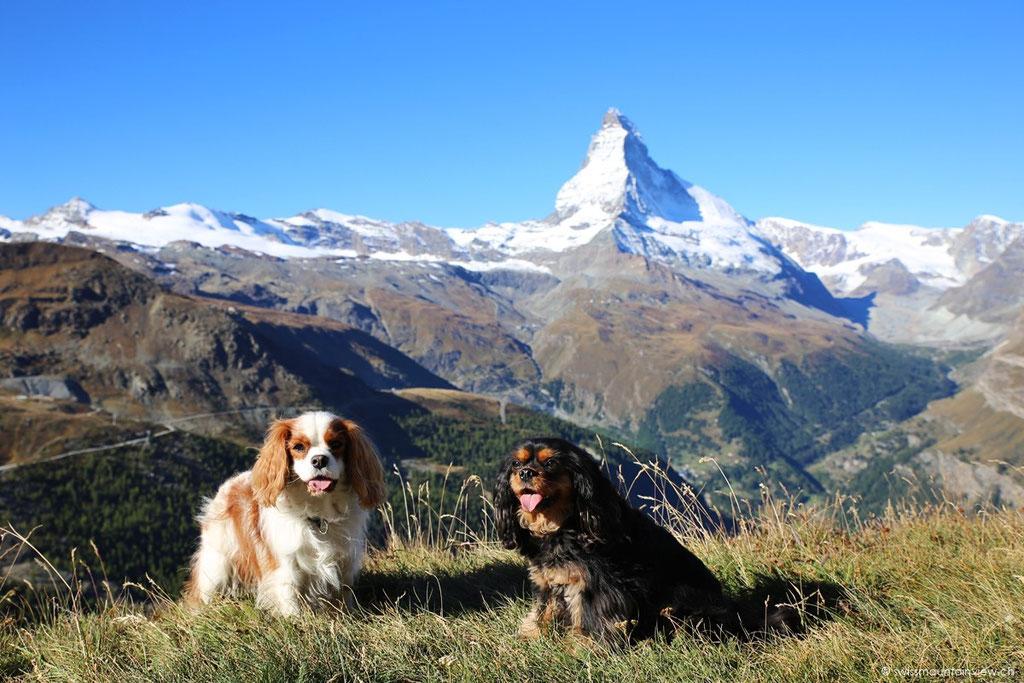 Wir freuen uns auf die tolle 5-Seen Wanderung in Zermatt.