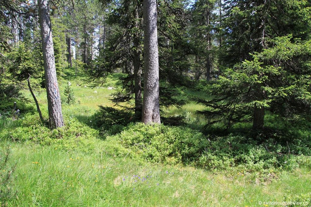 Weiter unten führt der Weg durch den Wald