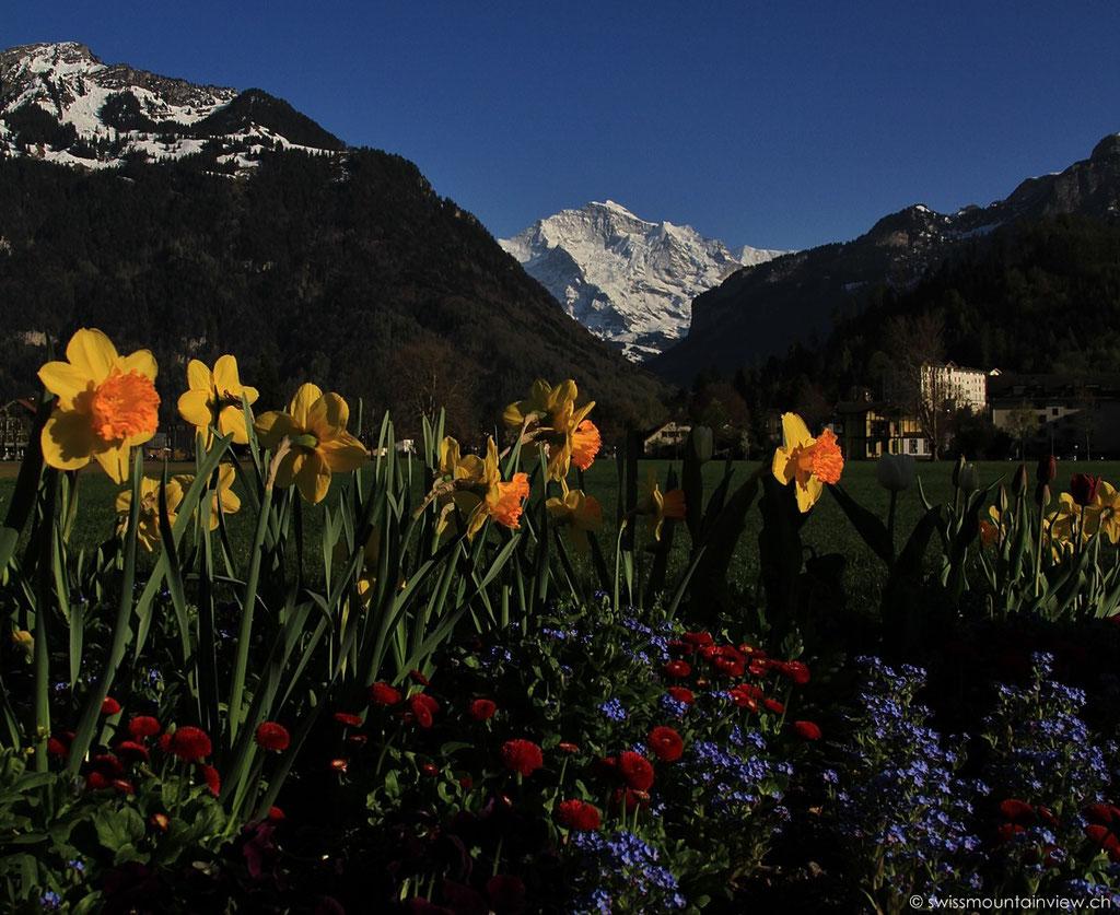 Interlaken - Höhenmatte