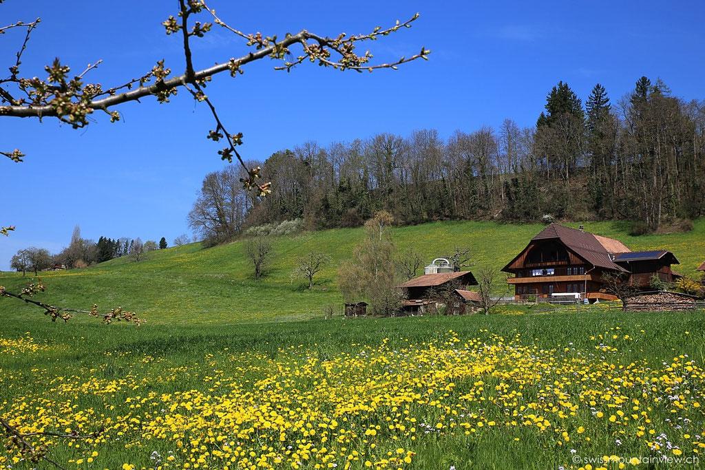 Steffisburg, Berner Oberland - Bernese Oberland