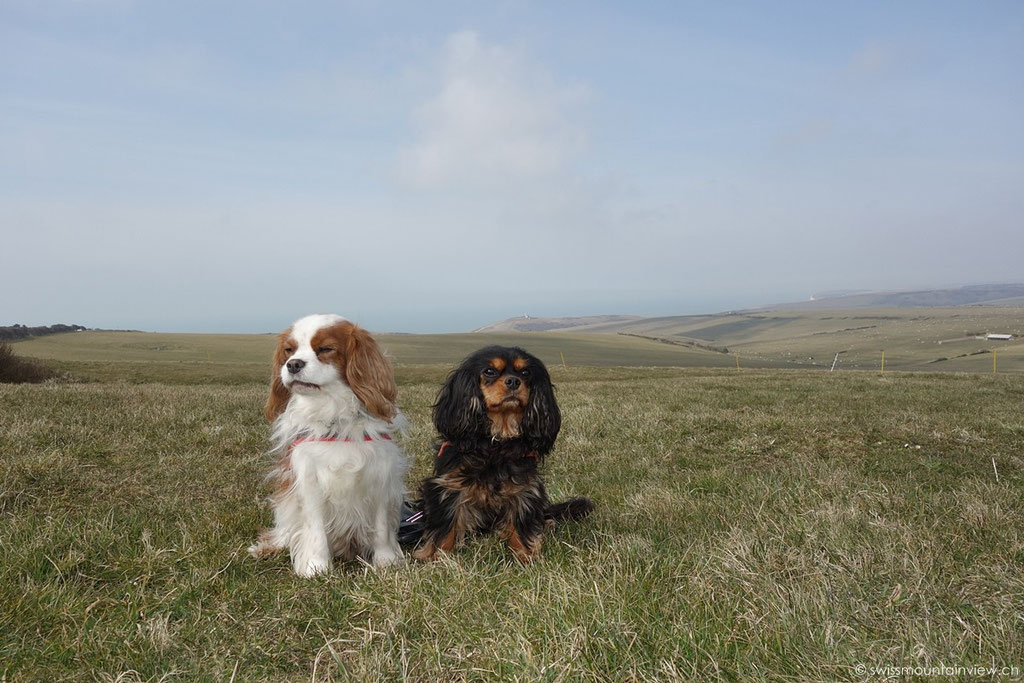 Two Cavaliers in their Homeland :)