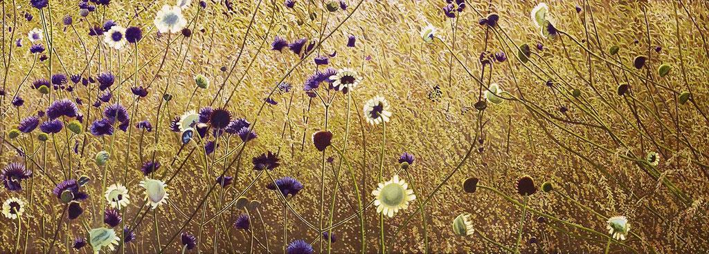 Korbblütler | 2019 | 65 x 180 cm | Acryl auf Leinwand