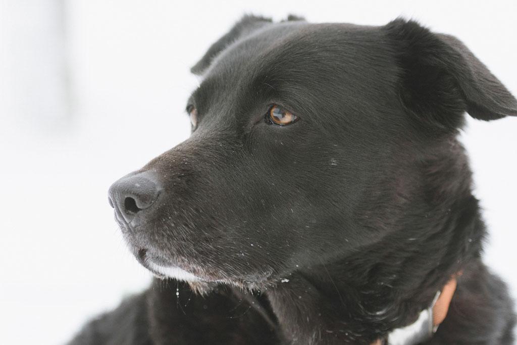 Tierfotografie Hunde Winter