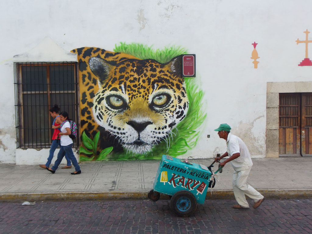 Jaguar, Merida, Mexico, 2017