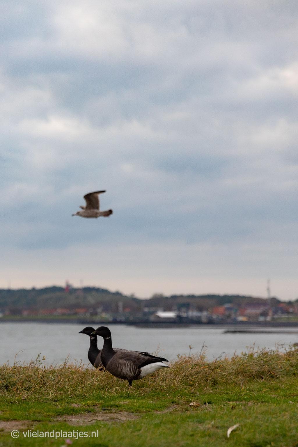'Vlieland Vogeland'