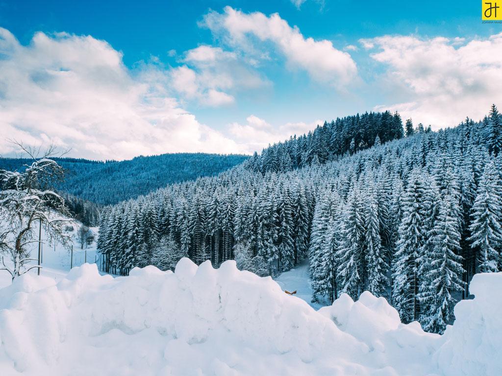 Schwarzwald - © JOANNA HAAG