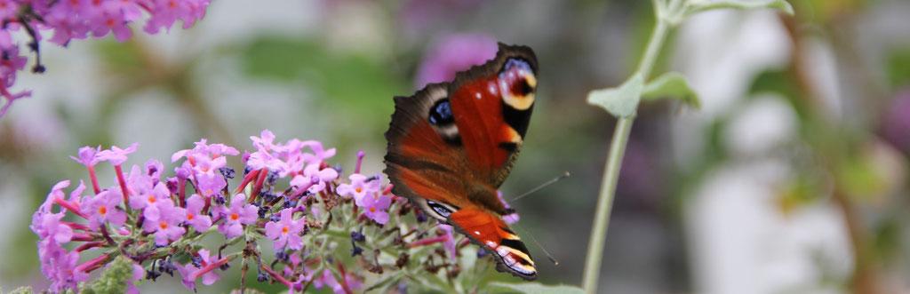 Bild: Abenteuer Wandel, Tiefenökologie, zartes Leben, Bewusstsein, Schmetterling als Wunderwerk