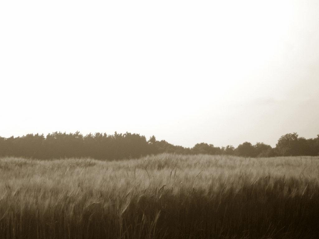 Getreide Feld Aussicht Vintage