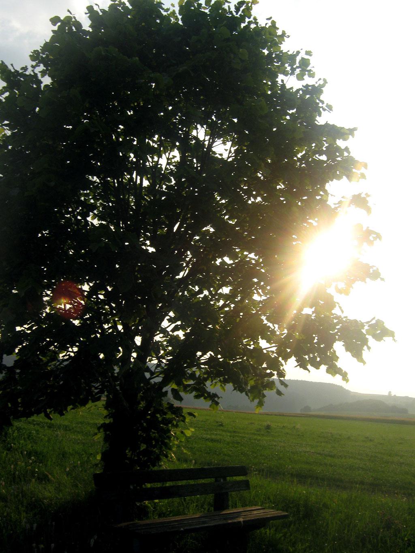 Bank Baum Linde Wiese Sonne Aussicht Gutes Schönes Wetter nervenkeks