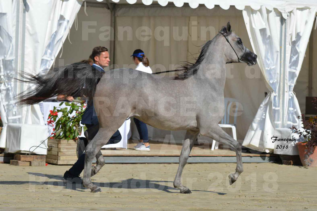 Championnat de FRANCE de chevaux Arabes à Pompadour en 2018 - SANIA DU CAYRON - Notre Sélection - 30