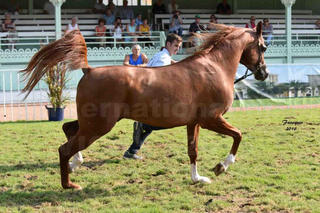 International Arabian Horse Show B de VICHY 2016 - DZHARI NUNKI - Notre Sélection - 24