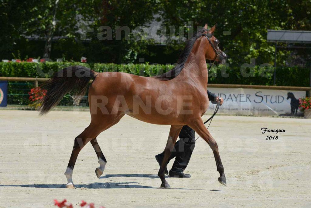 Championnat de FRANCE des chevaux Arabes à Pompadour en 2018 - SH CHARISMA - Notre Sélection - 27
