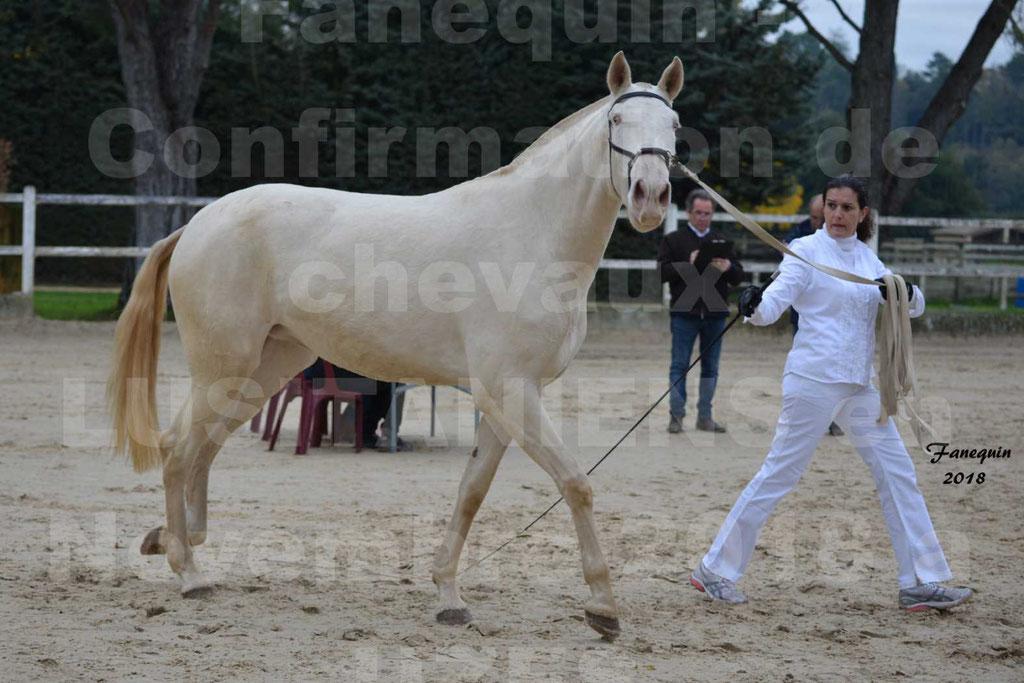 Confirmation de chevaux LUSITANIENS aux Haras d'UZES Novembre 2018 - LOLIBLOU - 02