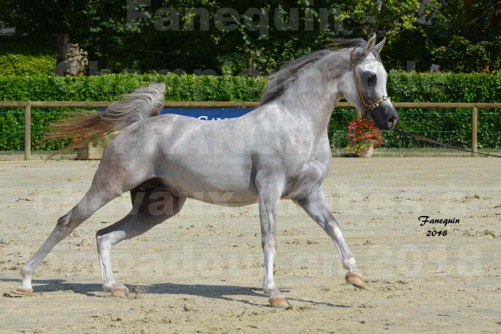 Championnat de FRANCE de chevaux Arabes à Pompadour en 2018 - SH CHAGALL - Notre Sélection - 06