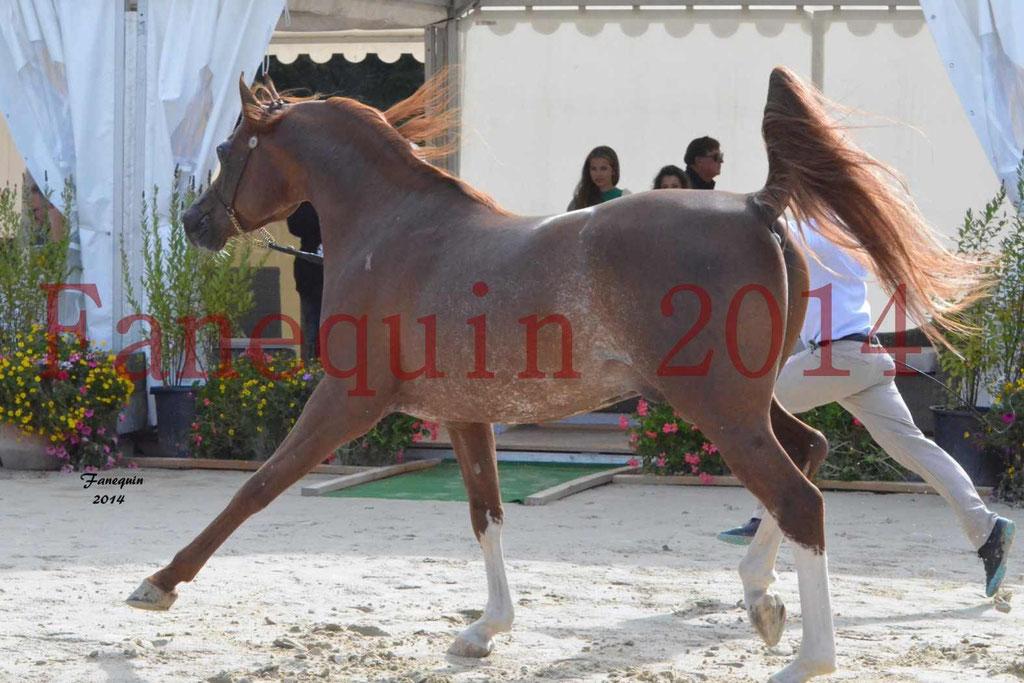 CHAMPIONNAT DE FRANCE 2014 A POMPADOUR - Notre Sélection - AINHOA LE BASQUE - 4