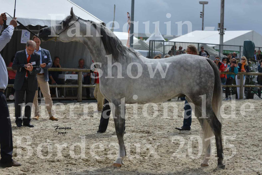 Salon Equitaine de Bordeaux 2015 - Show International de chevaux ARABES - 5