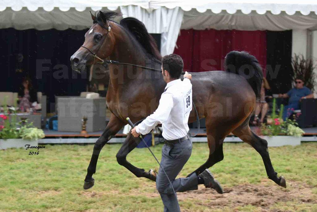 International Arabian Horse Show B de VICHY 2016 - MILLIAR - Notre Sélection - 32