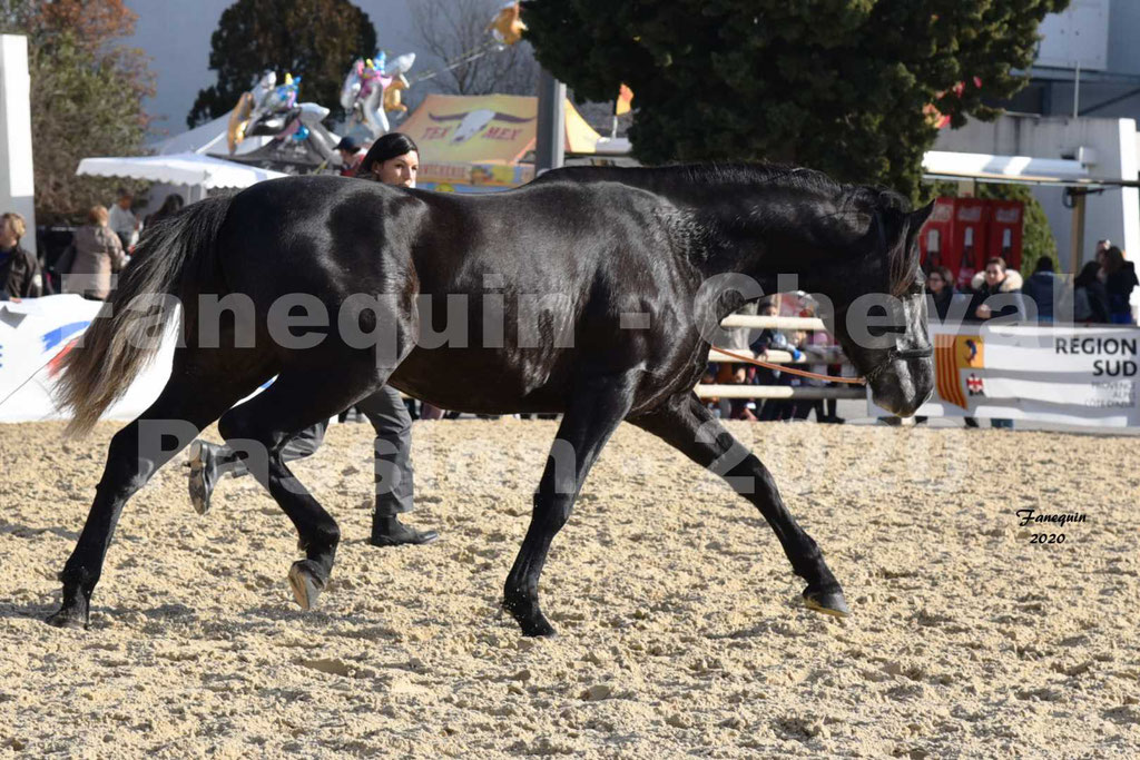 Cheval Passion 2020 - Elevage de PRE Pure Race Espagnol de Marie BRIOT