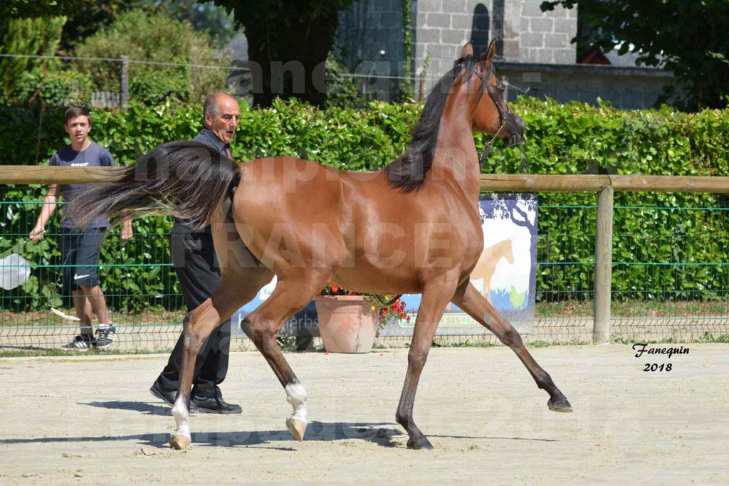 Championnat de FRANCE des chevaux Arabes à Pompadour en 2018 - SH CHARISMA - Notre Sélection - 25
