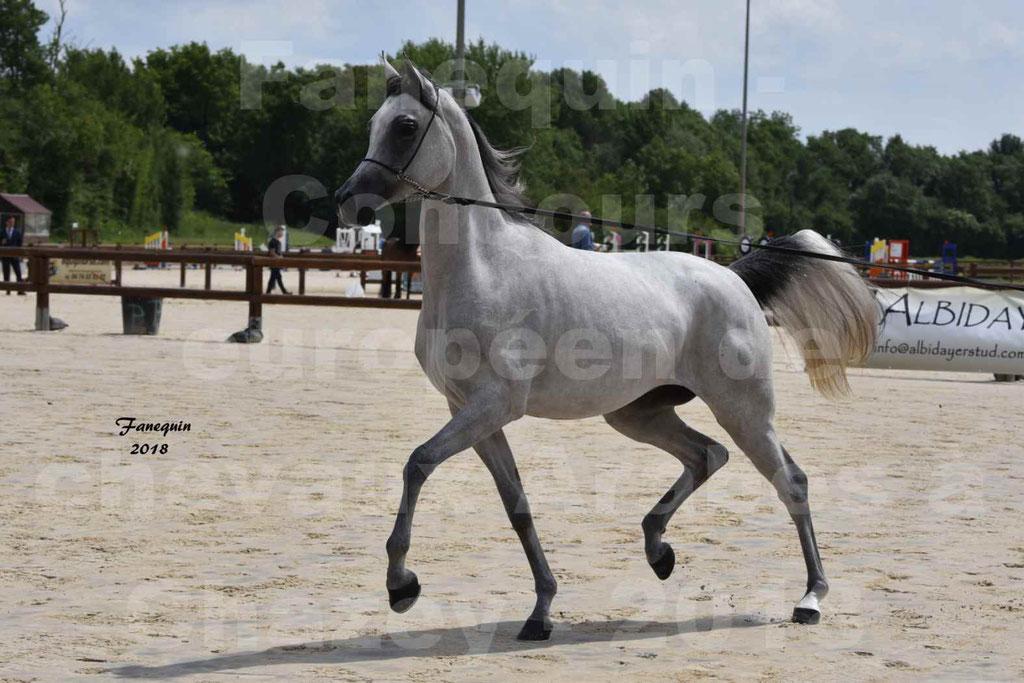 Concours Européen de chevaux Arabes à Chazey sur Ain 2018 - FATIN ALBIDAYER - Notre Sélection - 03