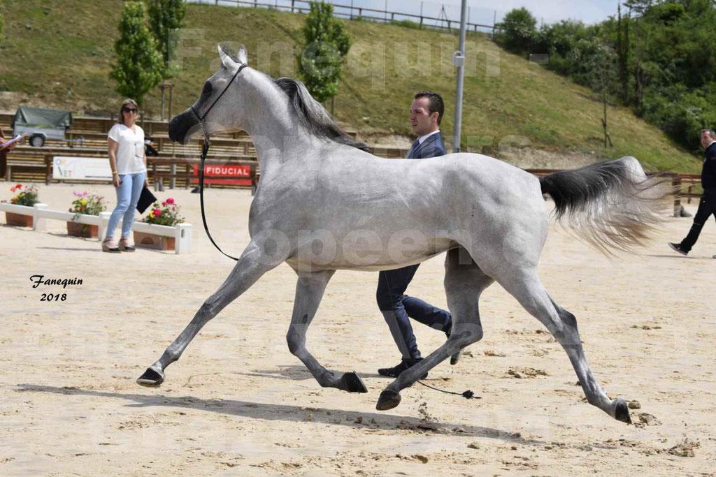 Concours Européen de chevaux Arabes à Chazey sur Ain 2018 - FATIN ALBIDAYER - Notre Sélection - 09