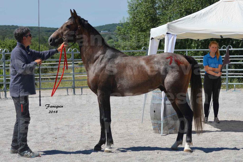 Concours d'Elevage de chevaux Arabes  le 27 juin 2018 à la BOISSIERE - DORKKAN DE FIGNOLS - 01