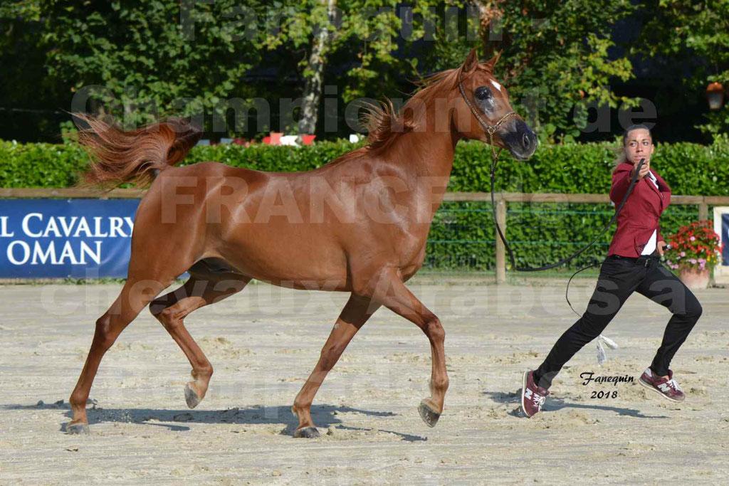 Championnat de FRANCE de chevaux Arabes à Pompadour 2018 - MAAMAR ISHANE - Notre Sélection - 14