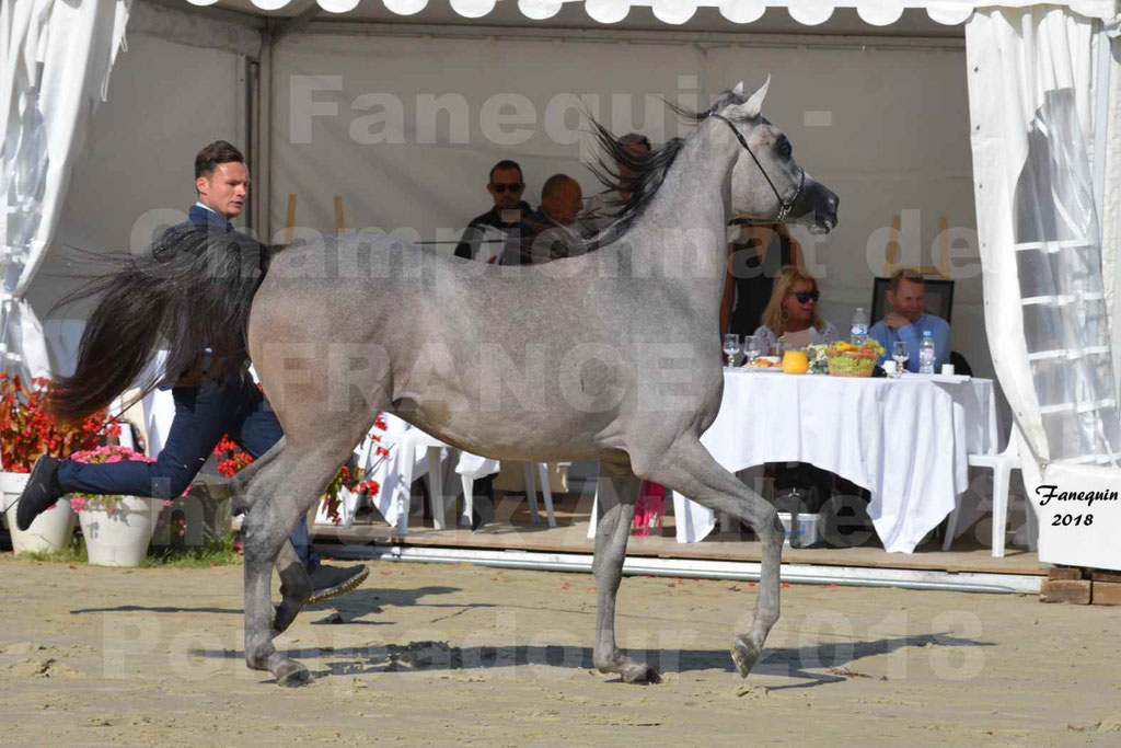 Championnat de FRANCE de chevaux Arabes à Pompadour en 2018 - SANIA DU CAYRON - Notre Sélection - 41