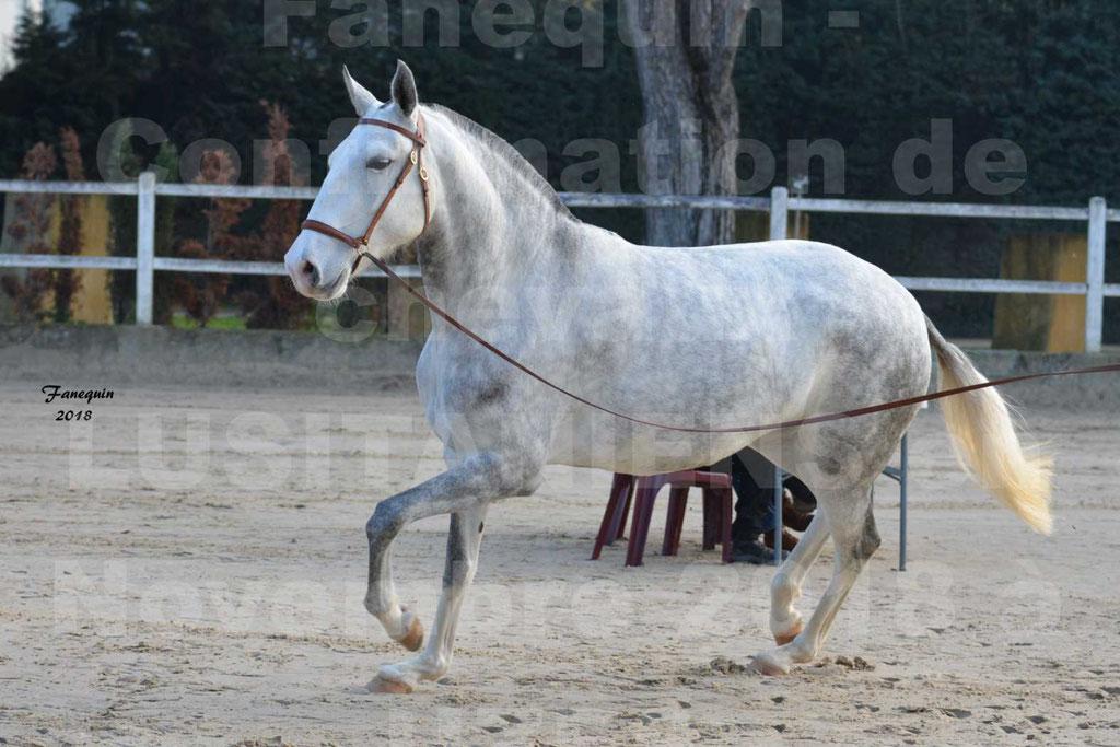 Confirmation de chevaux LUSITANIENS aux Haras d'UZES Novembre 2018 - LUTECE DU CASTEL - 19