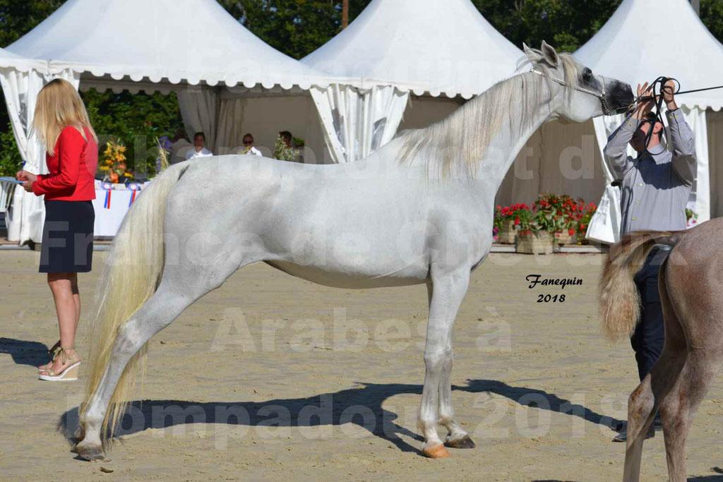 Championnat de FRANCE de chevaux Arabes à Pompadour en 2018 - ESTALIA - 37