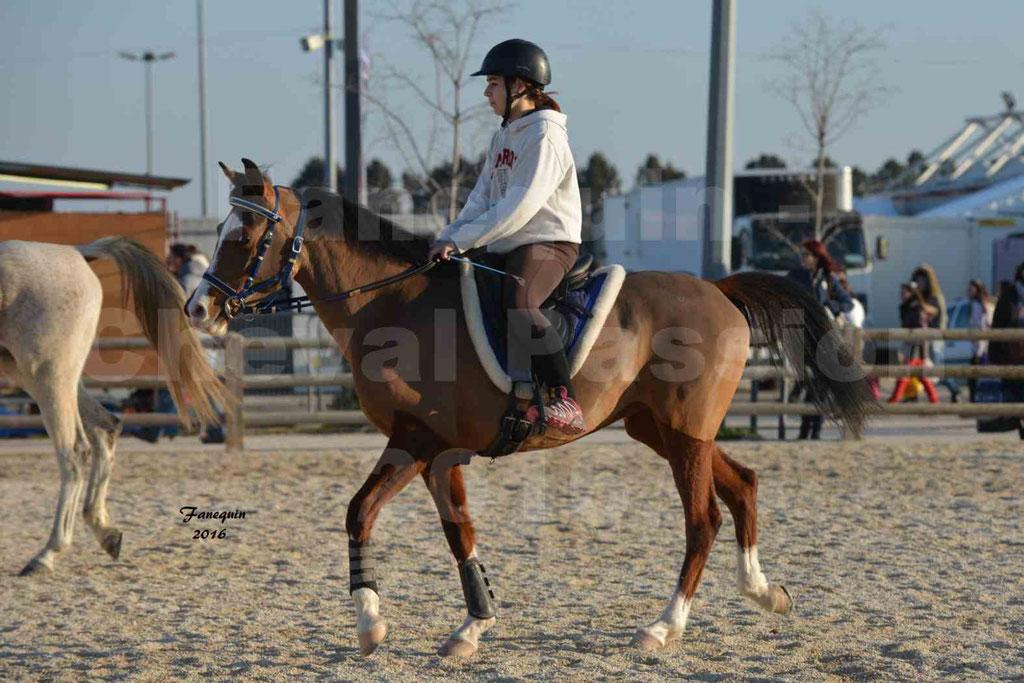 Cheval Passion 2016 - Présentation extérieure de chevaux Arabes montés - 02