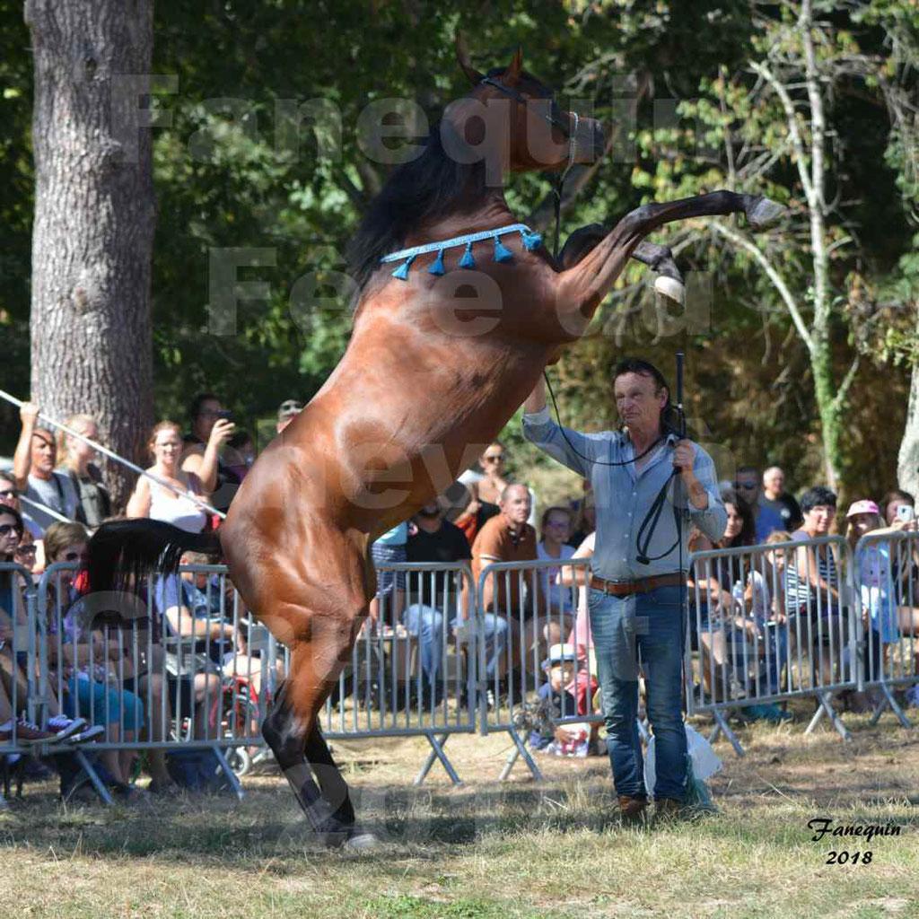 Fête du cheval à GRAULHET le 16 septembre 2018 - Présentation de chevaux Arabe Elevage de GACIA - 07